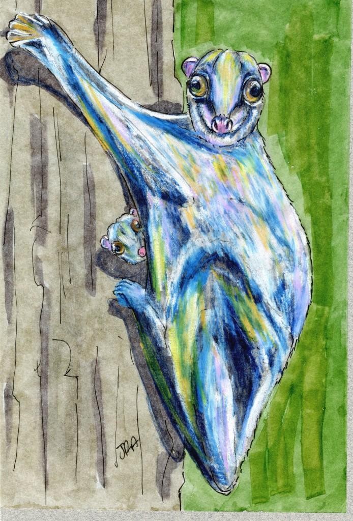 Philippine Flying Lemur (Colugo) (Cynocephalus volans)