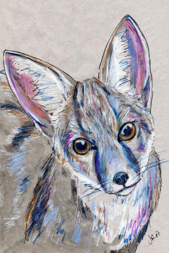 Mammalthon 2: Kit Fox (Vulpes macrotis)