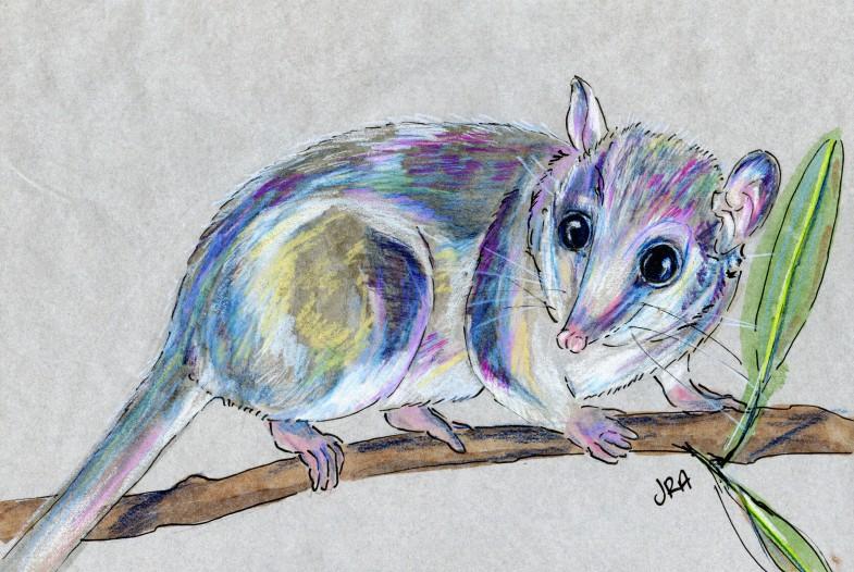 Dromiciops australis