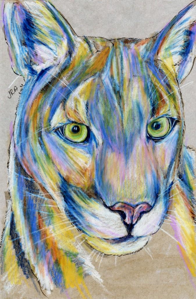 Felis concolor