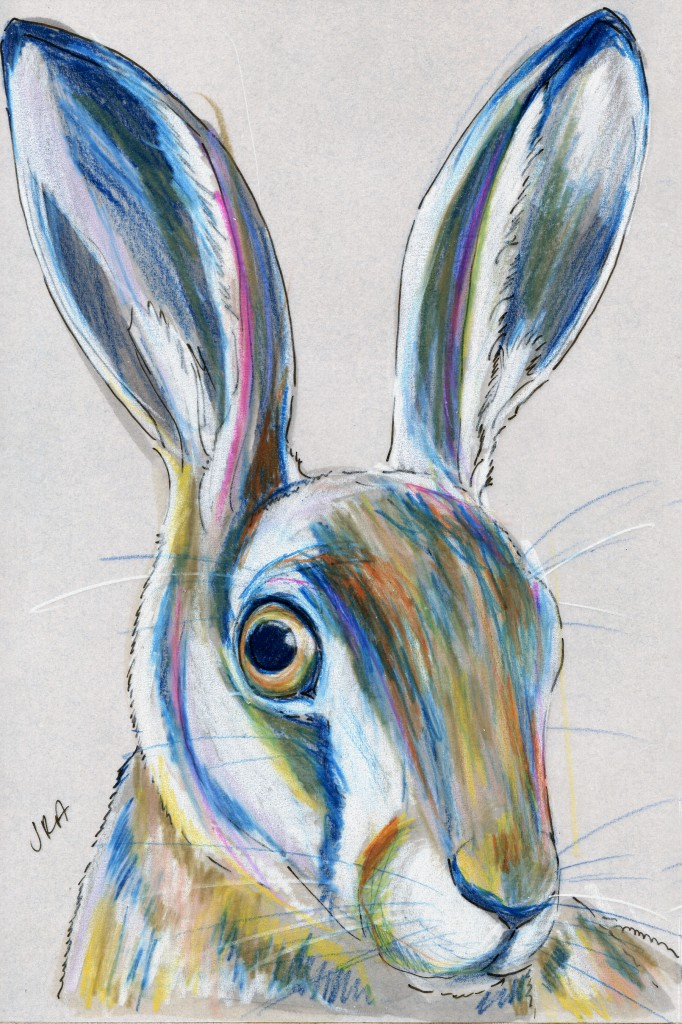 Mammals of Iraq: European Hare (Lepus europaeus)