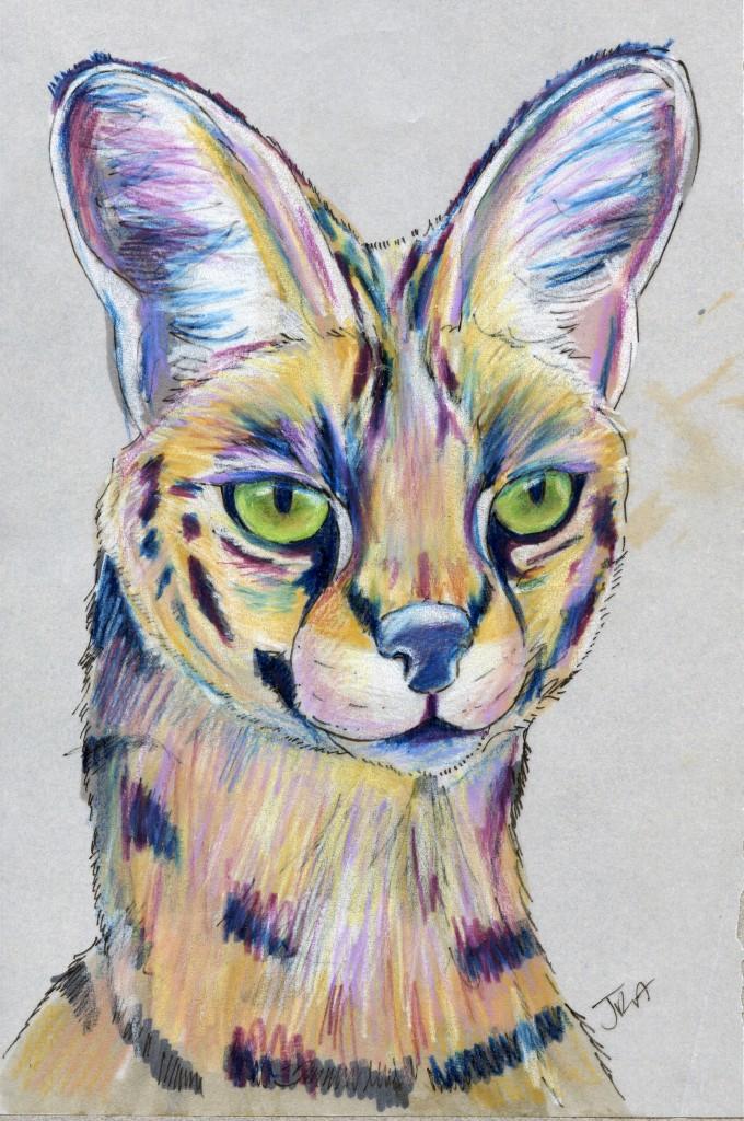 Felis serval