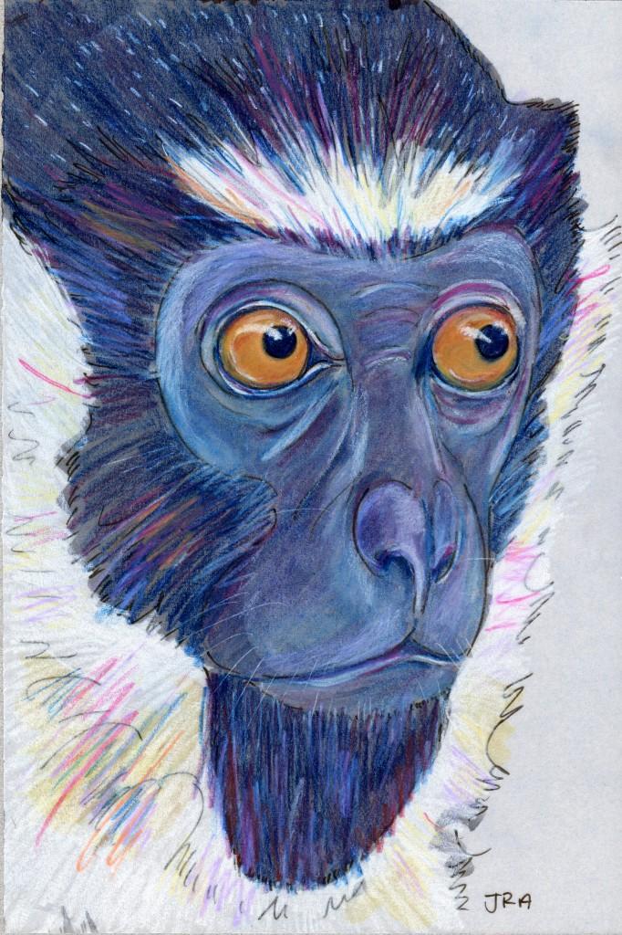 Diana Monkey (Cercopithecus diana) and Daily Mammal Book Club!
