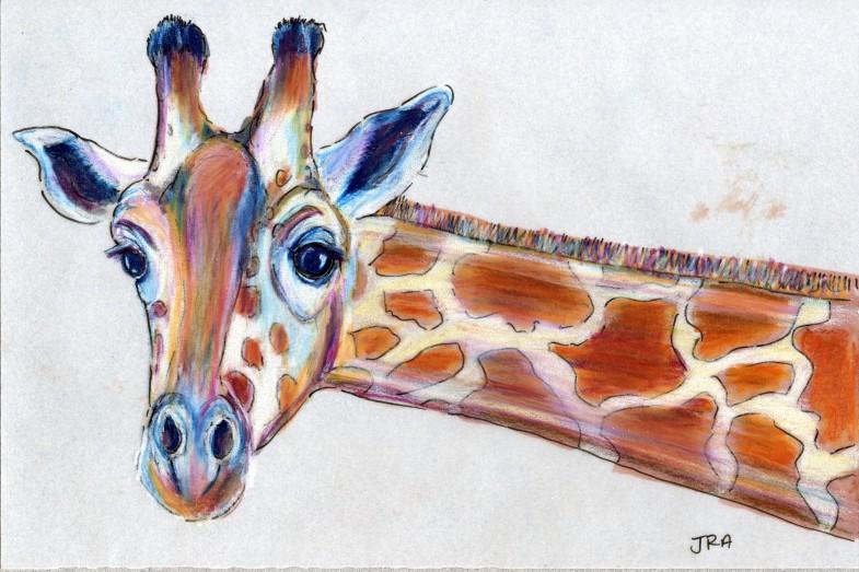 Darwin Days: Giraffe (Giraffa camelopardalis)