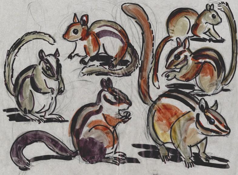 Six chipmunk species from the genus Tamias