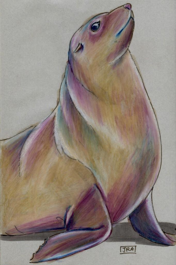 Daily Mammal Now: Cape Fur Seal (Arctocephalus pusillus)