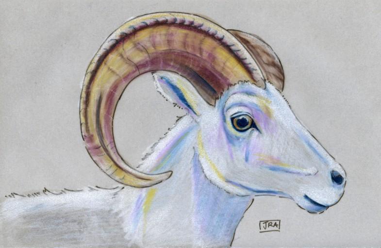 Mammals of Alaska Week: Thinhorn (Dall) Sheep (Ovis dalli)