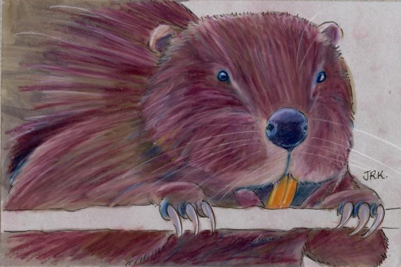 World Cup: England's European Beaver (Castor fiber)