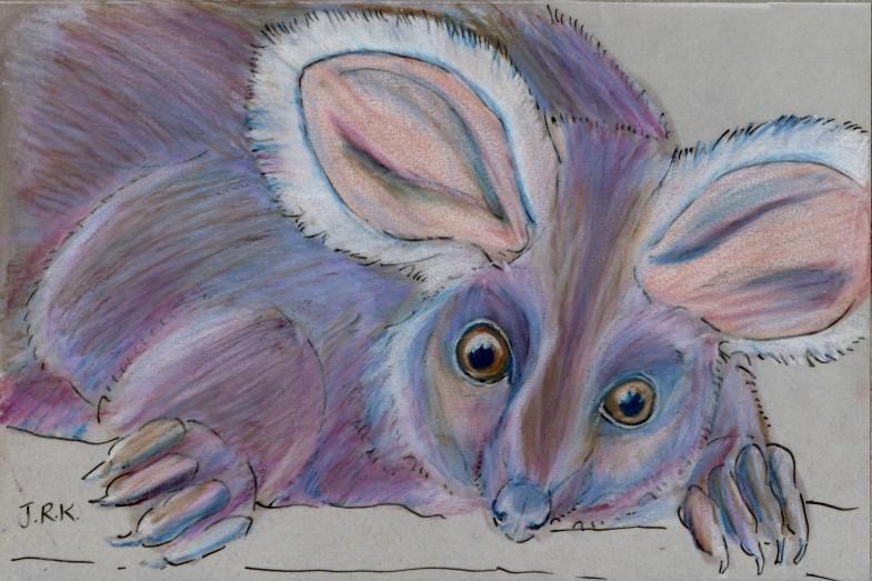 Petauroides volans