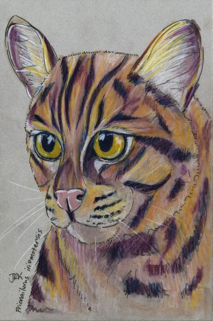 Japan Benefit: イリオモテヤマネコ (Iriomote Cat) (Prionailurus iriomotensis)