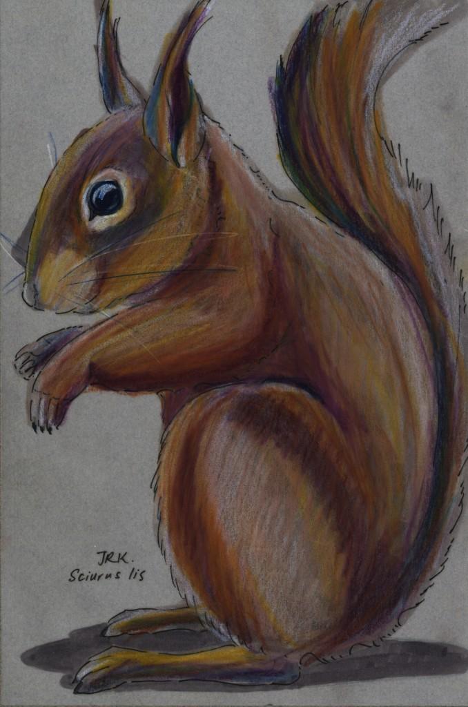 Japan Benefit: ニホンリス (Japanese Squirrel) (Sciurus lis)
