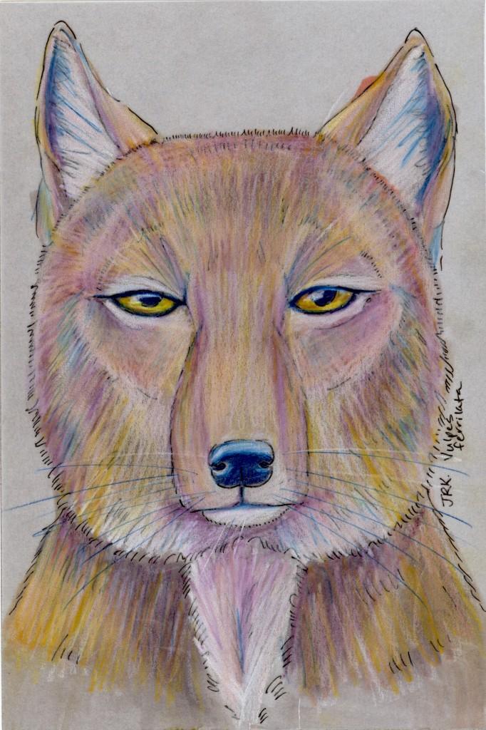 Tibetan Fox (Vulpes ferrilata)