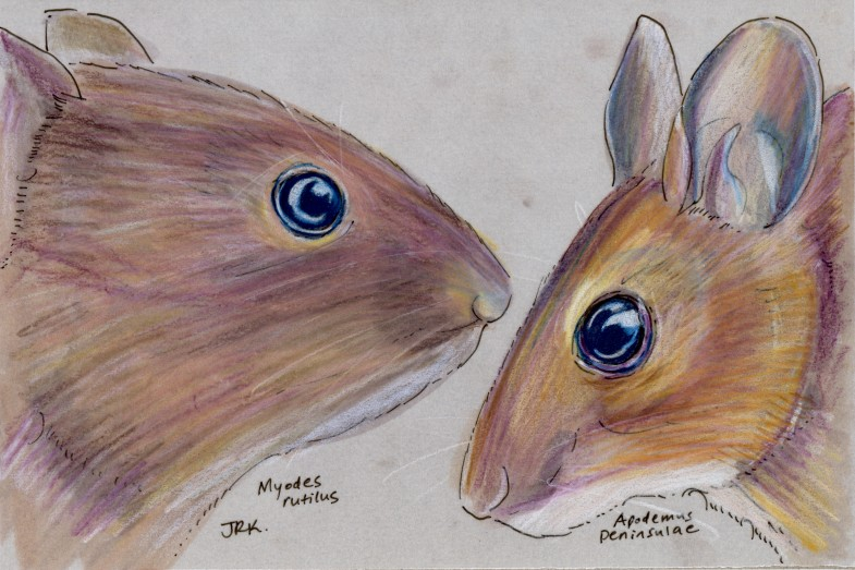Two rodents
