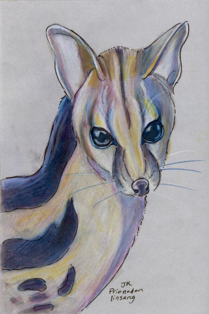 Banded Linsang (Prionodon linsang)