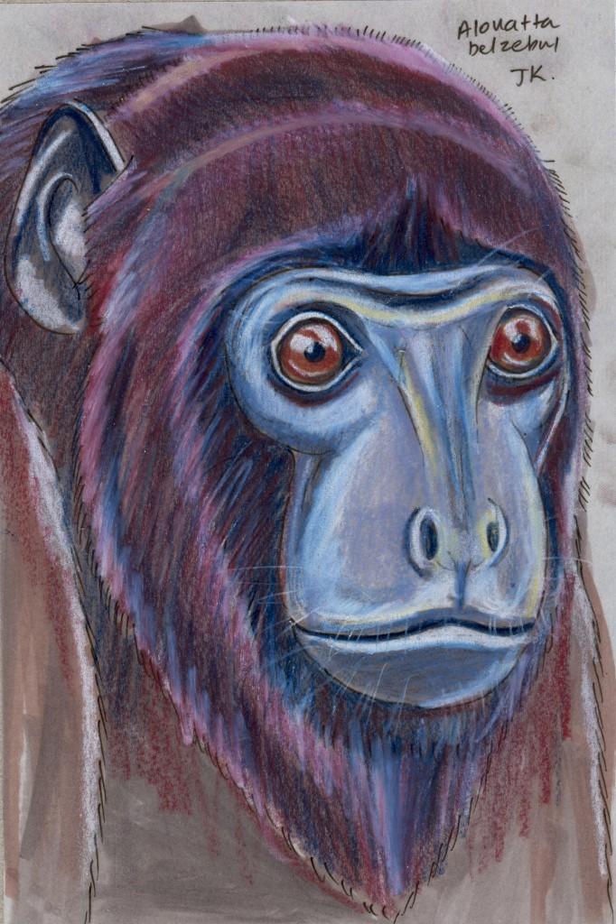 Random Week: Red-handed Howler Monkey (Alouatta belzebul)
