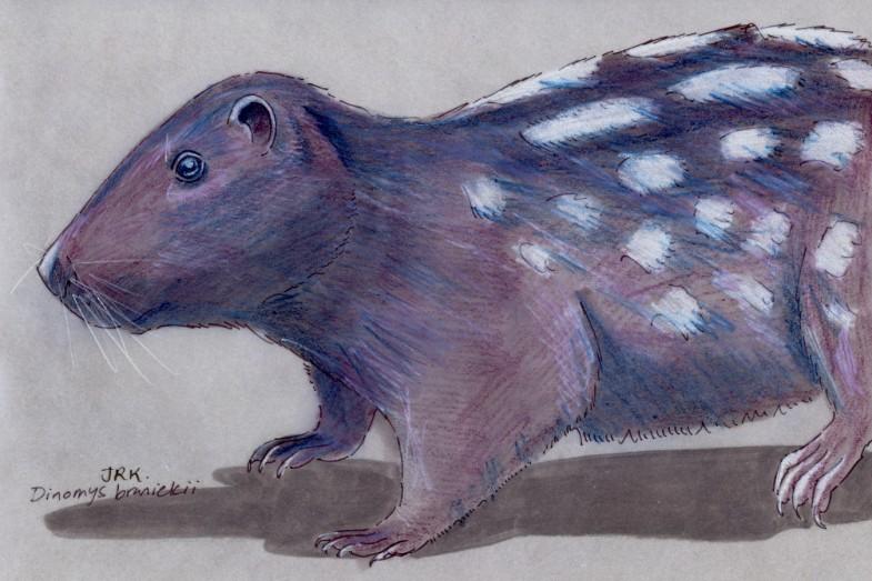 Dinomys branickii