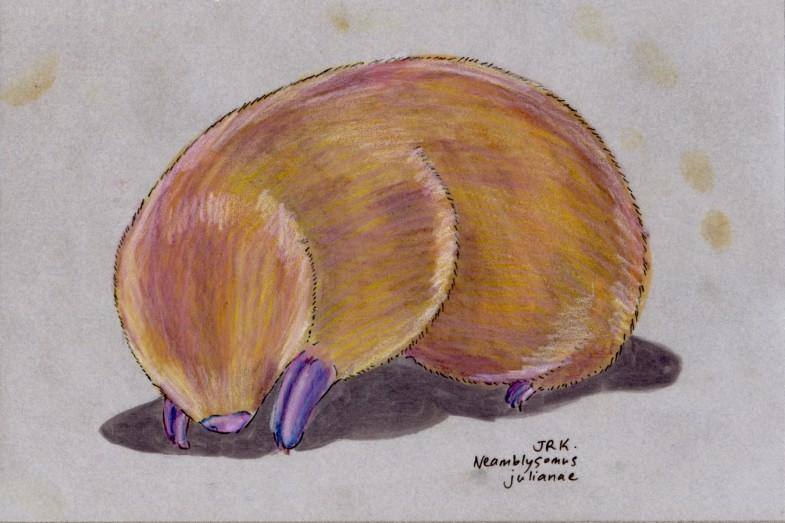 Juliana's Golden Mole (Neamblysomus julianae)