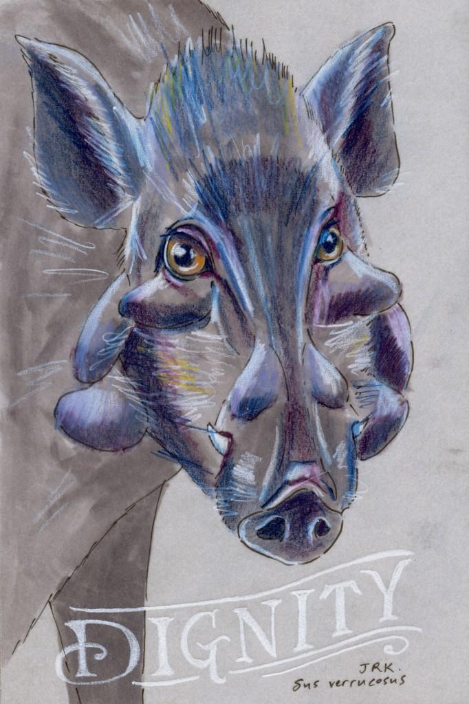 Javan Warty Pig (Sus verrucosus)