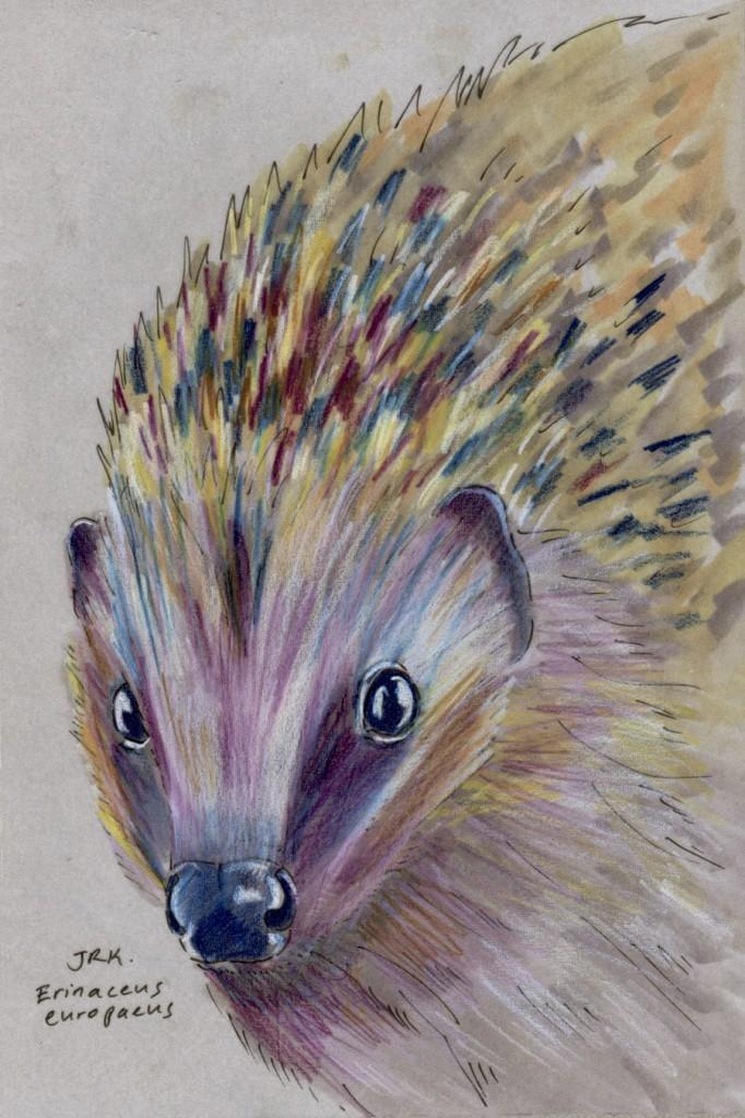 Facebook Friends: United Kingdom: European Hedgehog (Erinaceus europaeus)