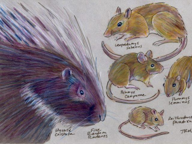 Five Random Rodents