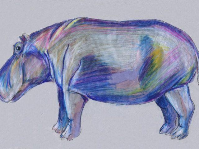 Nile Hippopotamus (Hippopotamus amphibius)