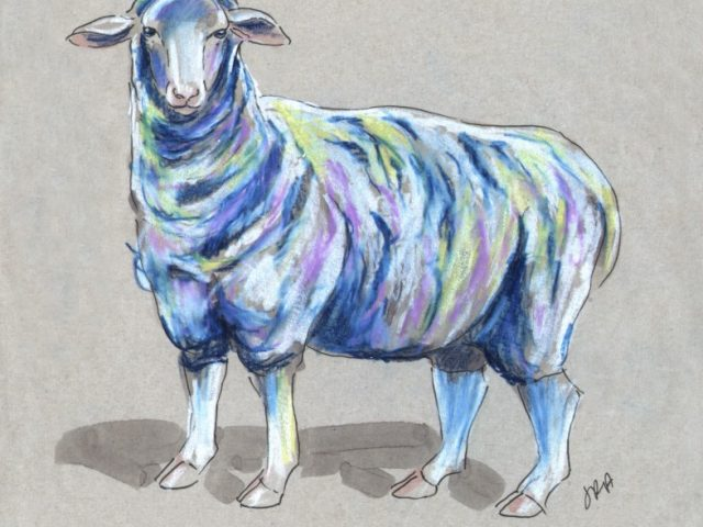 Domestic Sheep (Ovis aries)