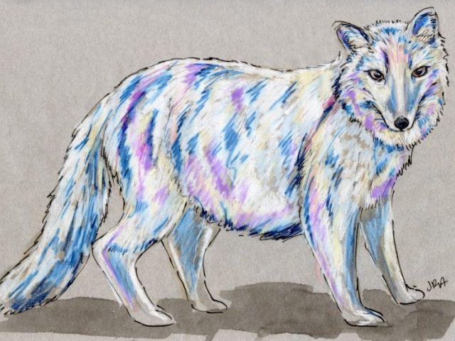 Back Orders: Arctic Fox (Alopex lagopus)