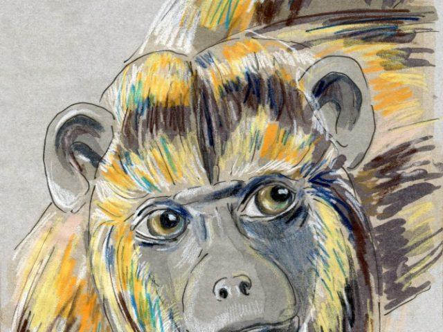 Back orders: Black Howler Monkey (Alouatta pigra)