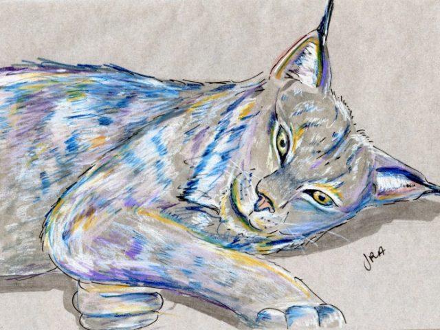 Mammalthon 2: Canada Lynx (Lynx canadensis)