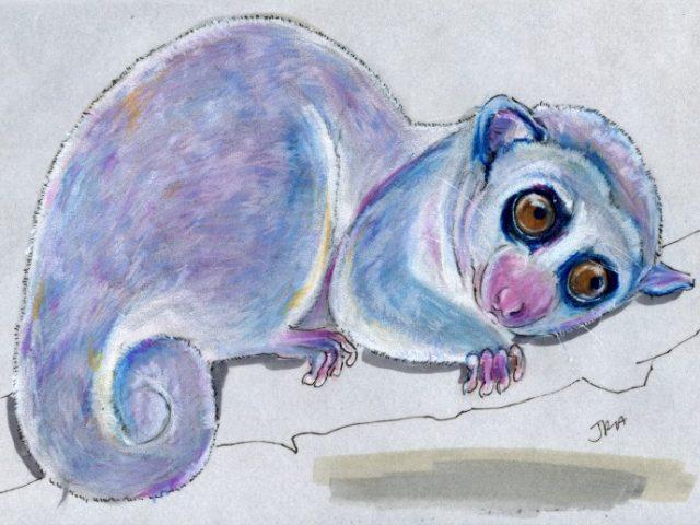 Hibernators Week: Fat-tailed Dwarf Lemur (Cheirogaleus medius)