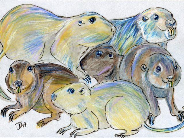 Darwin Days: Tuco-Tucos Six Ways (Ctenomys spp.)