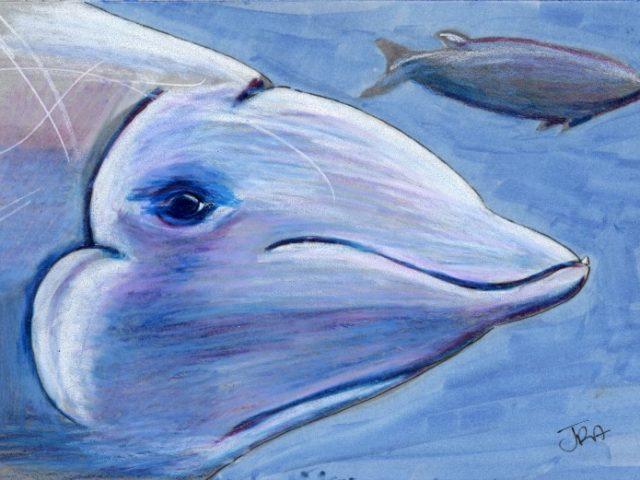 Mammals of Hawaii Week: Cuvier's Beaked Whale (Ziphius cavirostris)