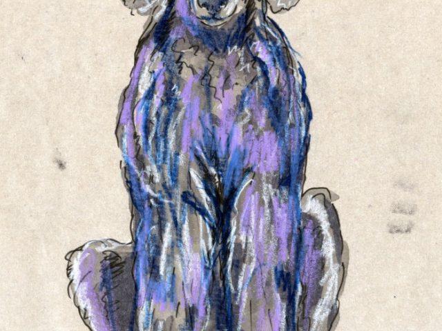 24 Hours: Dog (Canis lupus familiaris)
