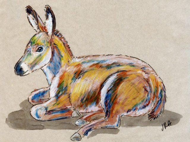 24 Hours: Domesticated Donkey (Equus asinus)
