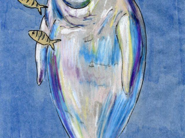 Mammalthon 2: Dugong (Dugong dugon)