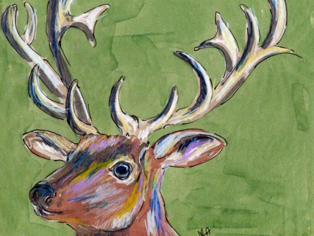 24 Hours: Elk (Wapiti)