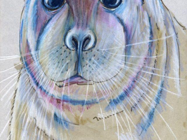 Mammals of Alaska Week: Bearded Seal (Erignathus barbatus)