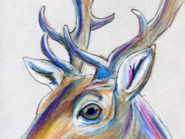 Mammals of Iraq: Fallow Deer (Dama dama)