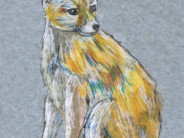 Nocturnal Week: Fennec Fox (Vulpes zerda)