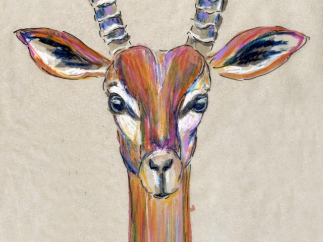 24 Hours: Gerenuk (Who knows?)