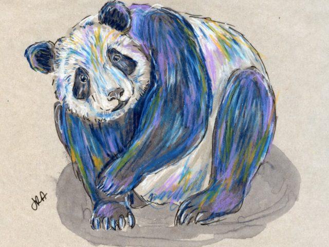 24 Hours: Giant Panda