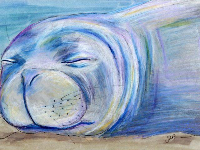 Mammals of Hawaii Week: Hawaiian Monk Seal (Monachus schauinslandi)