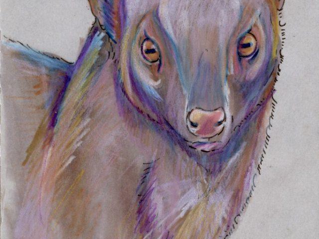 Indian Grey Mongoose (Herpestes edwardsii)