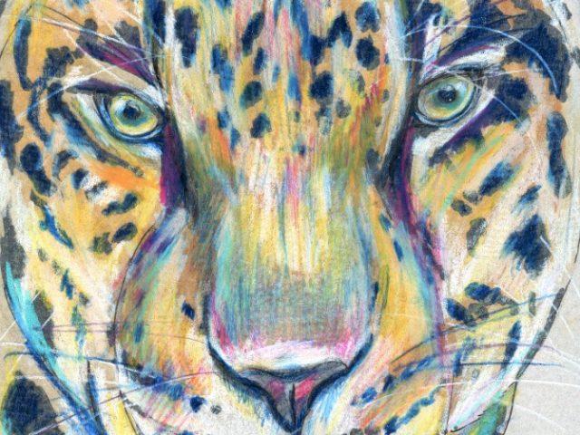 Mammals of New Mexico Week: Jaguar (Panthera onca)