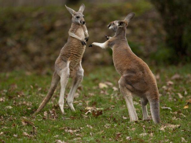 Mammal News Roundup