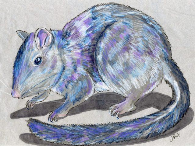 Newly Described Mammals Week: Laotian Rock Rat (Laonastes aenigmamus)