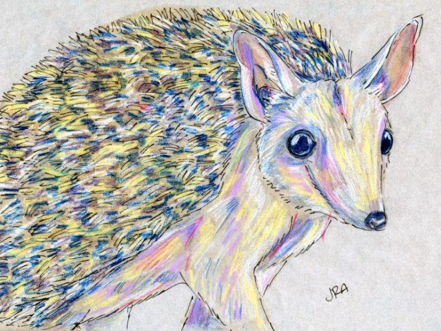 Long-eared Desert Hedgehog (Hemiechinus auritus)