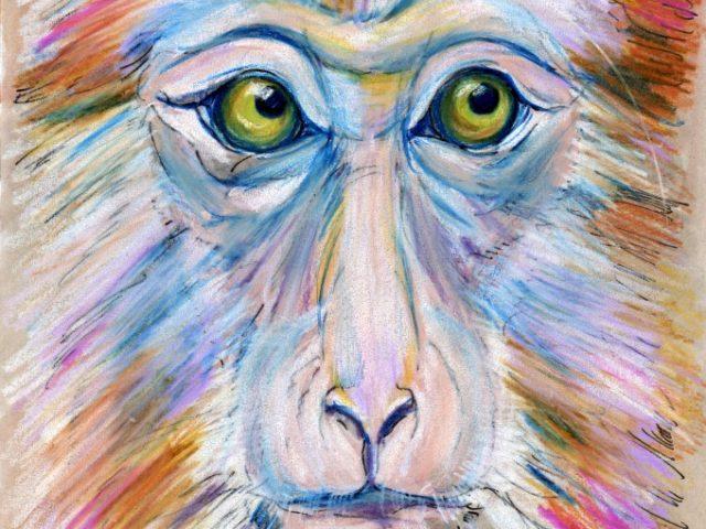 Chinese Stump-tailed Macaque (Macaca thibetana)