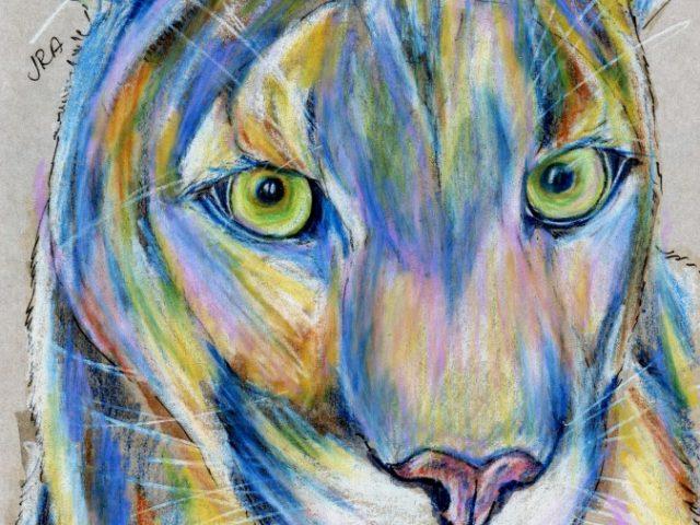 Mountain Lion (Felis concolor)