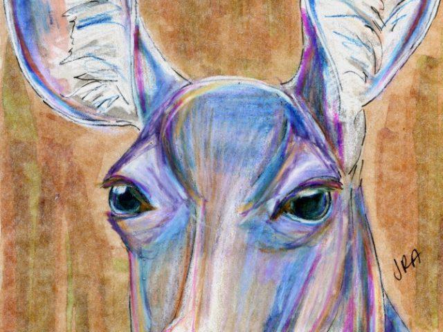 Mammalthon 2: Mule Deer (Odocoileus hemionus)